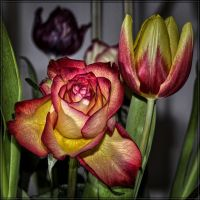 Rose_jm2205 by joergens-mi