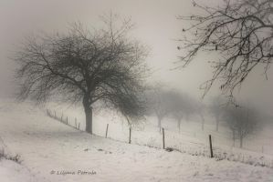 Foggy day by lpetrusa