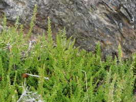 Plants by fairling-stock