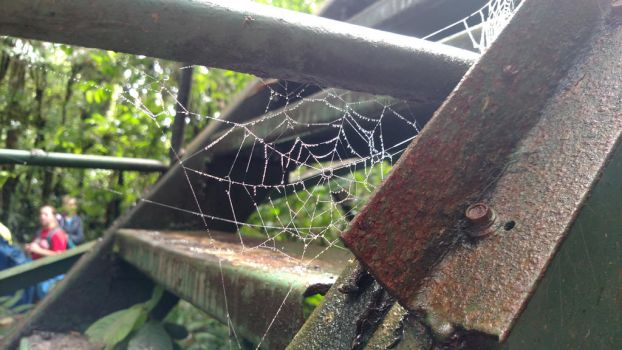 The Perfect Web by TigerDogPhotography