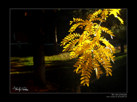 The Color of Autumn by Caligari-87