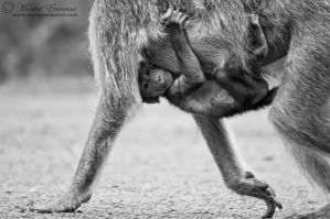 Holding on... by MorkelErasmus