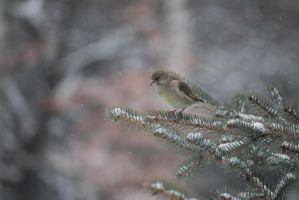 Mrs. Greenfinch by Swallow6