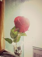 Single red rose by Laura-in-china