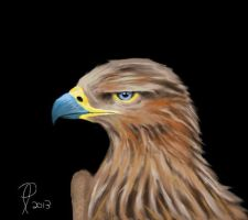 Golden Eagle by philippeL