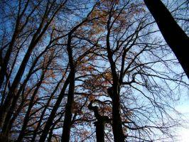 Trees in wind by megymaca