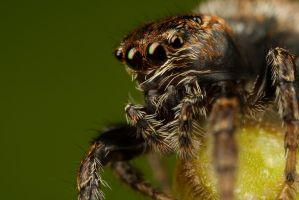 Large Jumper 4 by Alliec