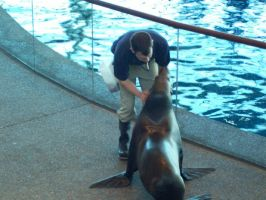 Sealion Training by shelbysingswords