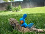 Riding on a Bearded Dragon by mudkipofpower