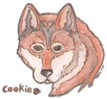 Cookie by Tebyx