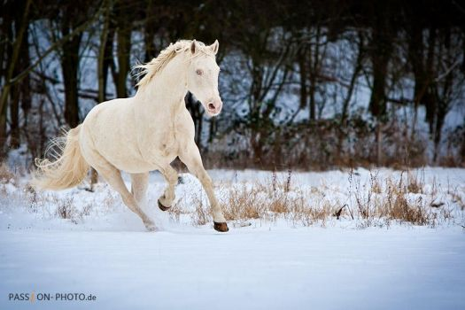 winter day II by PASSiON--PHOTO