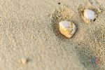 Seashells in my Footprints by MastersImagingPhotos