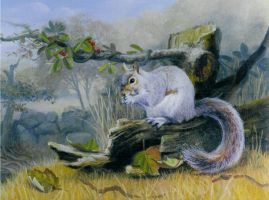 Squirrel by edlittle