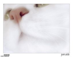 kitty10-pure white by insektokutor
