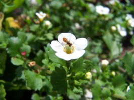 Little Bug On Little Flower by leavesXeyes