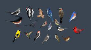 Birds Complete by InvisibleCatfish