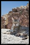 The Ephesian Cat by DanielGeesen