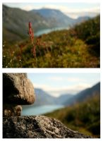 Details in the mountains by shefeldio29