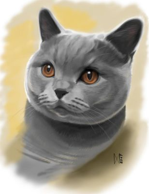 British shorthair cat by EnyaMahuta