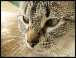 Strange look by pagone