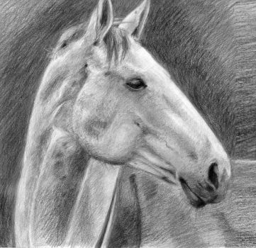 Horse by Miklche04