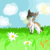 Contest Entry- Squirrelpaw by the-uke-prince