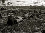 Desolation by sebastopolgoose