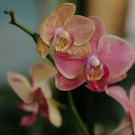 Orchids. by Lileinaya