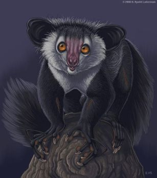 Painter Aye-aye by kyoht