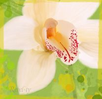 Orchid in spring colors by Rebel-ty