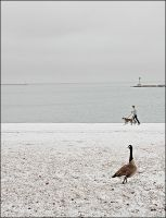 Goose and Dog by dkwynia