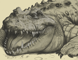 Crocodile Sketch by dendorrity