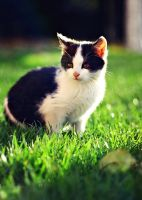 Little cat 3. by shadddow