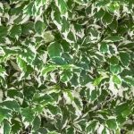 Leaves by Costia