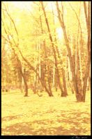 Yellow wood by Niccolet