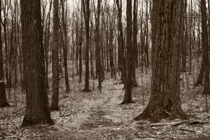 woods path stock background by Moon-WillowStock