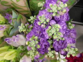 Grocery-Store-Flowers-I-016 by amethystmstock