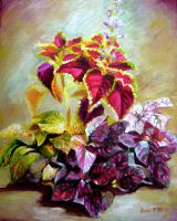 Coleus by veracauwenberghs