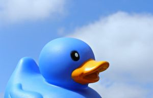 Blue Duck, Blue Sky by The--Enchantress