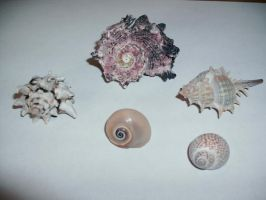 Seashells-1 by Rubyfire14-Stock