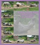 Rolling Horse Stock Pack by Photopolis