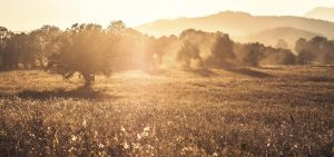 Dust and sun.. by Mark-Heather