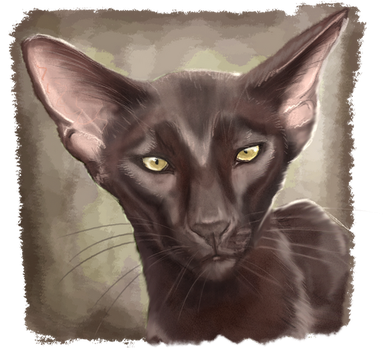 Oriental shorthair cat by RiverRaven
