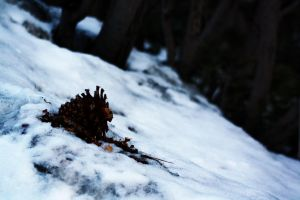 A Lonely Pine Cone by Wh4T