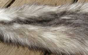 Ferret Fur Closeup by Eliea