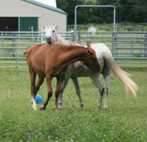Horse Interaction 7 .:Stock:. by Photopolis