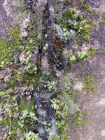 Free photo texture - Moss in frozen ice #2 by croicroga