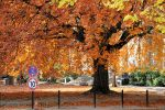 Autumn in Berlin by revsorg