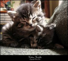 Kitten Huddle - In Colour by Aoxa-Cats