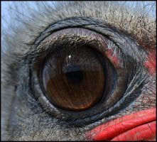 Ostrich Eye by FrankAndCarySTOCK